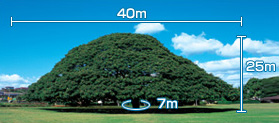 "Size of ""Hitachi Tree"""